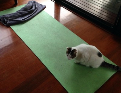 Oergezond gebrek aan discipline